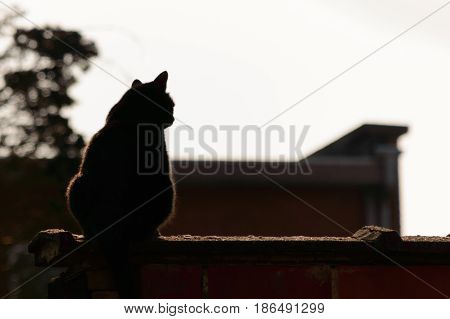 Black cat relaxing on a ledge back lit by the sun lighting the edges at sundown