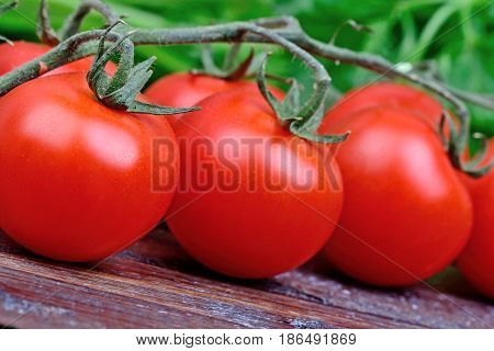 Heap of tomatoes and parsley on wooden table close-up