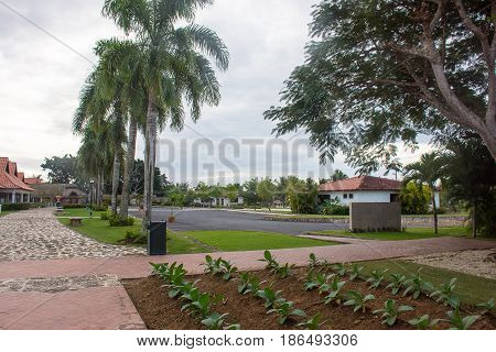 A Beautiful View Of The Hotel Territory With Palm Trees, A Path Of Red Brushes