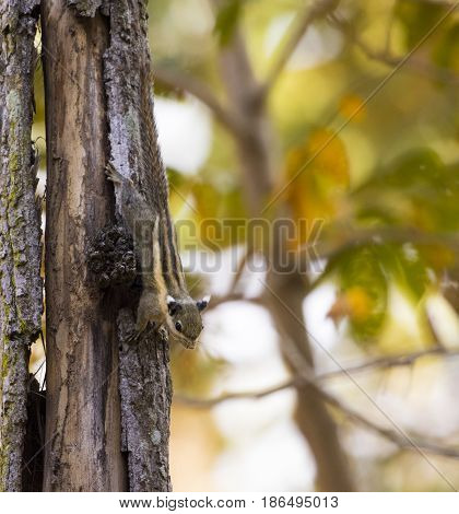 Image of Chipmunk small striped rodent. Wild Animals.