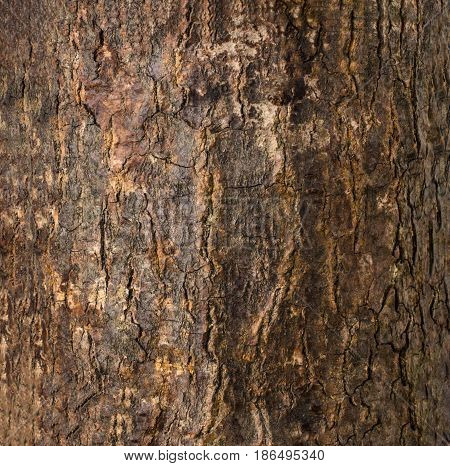 Close up photograph of rough cracked wood tree bark.