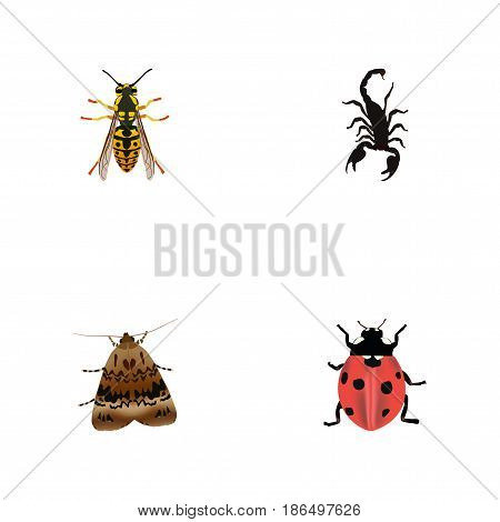 Realistic Butterfly, Ladybird, Bee And Other Vector Elements. Set Of Hexapod Realistic Symbols Also Includes Poisonous, Fly, Scorpion Objects.
