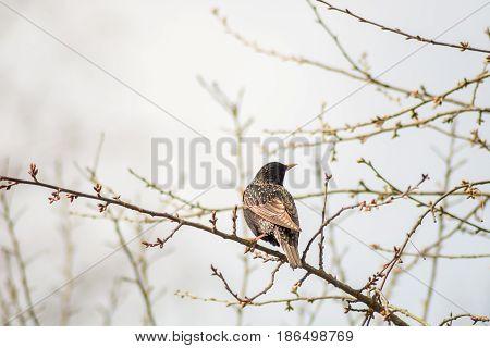 A Bird Walking On The Grass