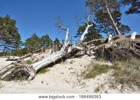 Natural erosion shore of Baltic sea coast
