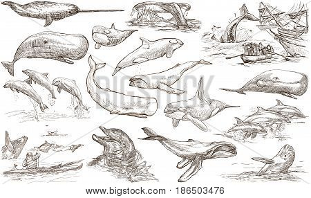 Animals around the World - CETACEANS Cetacea. Collection of an hand drawn illustrations. Colored freehand sketches. Line art. Drawings on white background isolated.