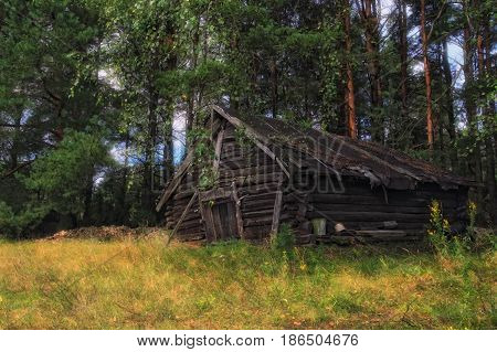 Abandoned fairy tale house in the thicket of the forest.Ancient Russian house in a pine forest.Forest landscape with fairy-tale house.View of traditional village house with pine trees and grass around