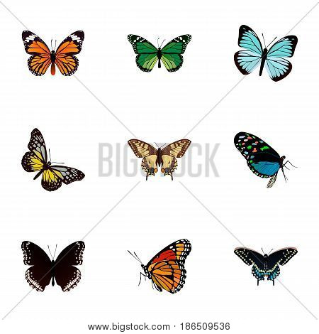 Realistic Hairstreak, Milkweed, Lexias And Other Vector Elements. Set Of Beautiful Realistic Symbols Also Includes Blue, Tiger, Moth Objects.