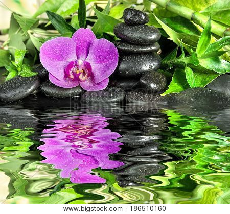 Spa concept with black basalt massage stones pink orchid flower and lush green foliage covered with water drops on a black background reflected in a water surface with small waves