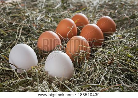 Poultry ecological farm background. Fresh brown and white eggs on hay closeup. Rural still life, natural organic healthy food concept.