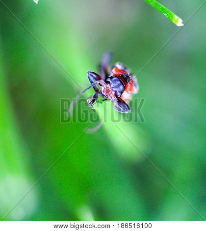 Insect On A Blade Of Grass