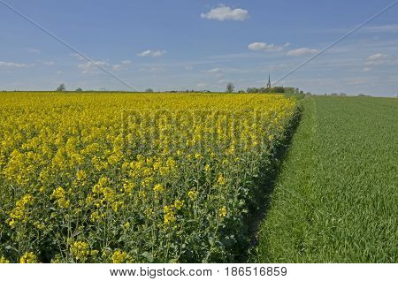A rural landscape: a field with ridges of soil fields of yellow canola and growing cereal in the background