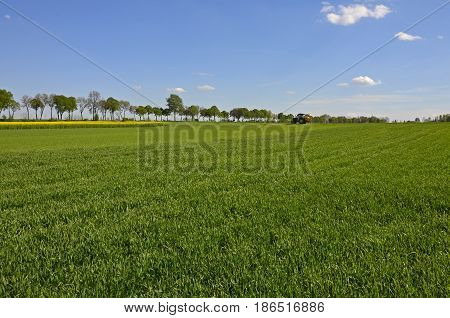 A rural view: a field of green crops with some yellow canola and a line of trees in the background