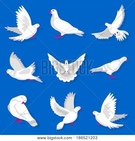 White cartoon pigeon with red beak and paws flies, takes off, lands, cleans feathers, spreads wings and stands from different foreshortening isolated vector illustrations set on blue background.