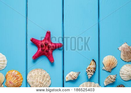 Summer background , Seashells on blue wooden background , Seashells on light blue background