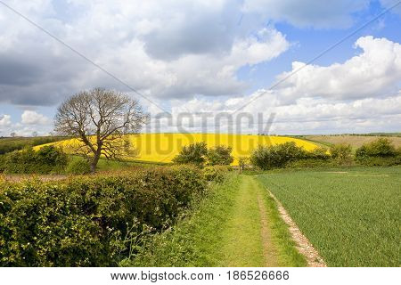 Country Footpath In Springtime