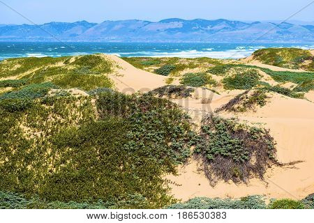 Native sand dunes with coastal chaparral shrubs taken at the Guadalupe Dunes in the California Central Coast