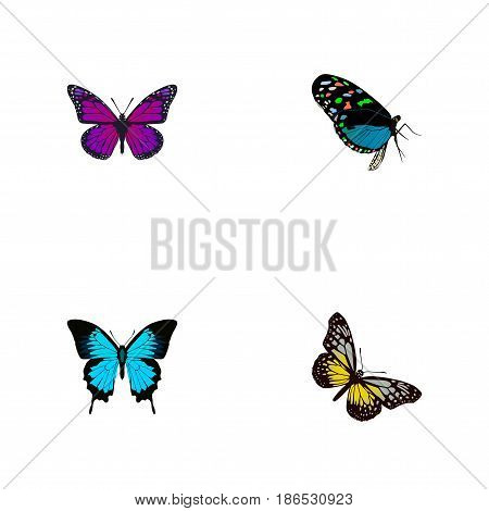 Realistic Hairstreak, Papilio Ulysses, Summer Insect And Other Vector Elements. Set Of Beauty Realistic Symbols Also Includes Beauty, Violet, Bluewing Objects.
