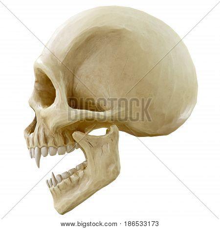 The vampire skull on white background. 3d rendering.
