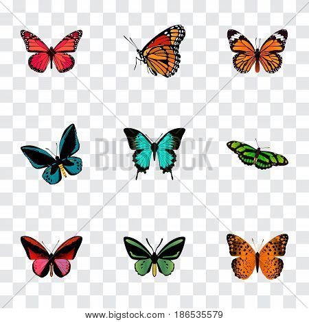 Realistic Milkweed, Copper, Tropical Moth And Other Vector Elements. Set Of Butterfly Realistic Symbols Also Includes Blue, Monarch, Brown Objects.