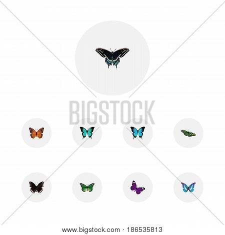 Realistic Morpho Hecuba, Copper, Danaus Plexippus And Other Vector Elements. Set Of Beautiful Realistic Symbols Also Includes Orange, Hypolimnas, Moth Objects.