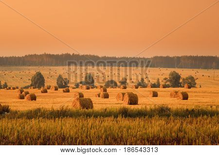 Rural Landscape Field Meadow With Hay Bales After Harvest In Sunny Evening At Sunset In Late Summer. Orange Sky.