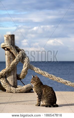 Port cat and rope on seafront in sun summer day. Turkey Erdek coast of Marmara.