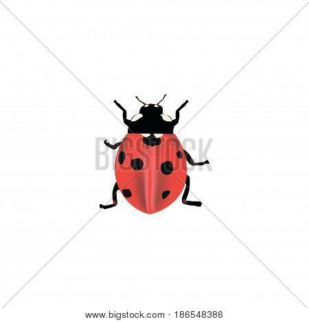 Realistic Ladybug Element. Vector Illustration Of Realistic Ladybird Isolated On Clean Background. Can Be Used As Ladybird, Ladybug And Insect Symbols.