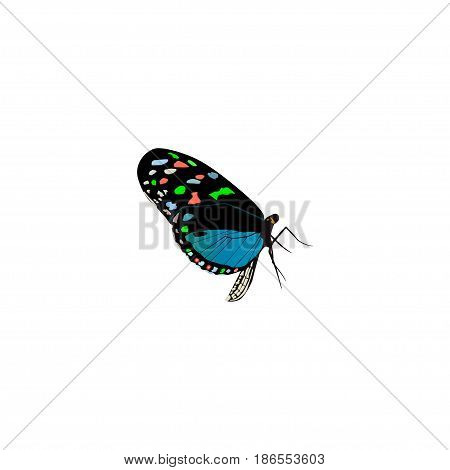 Realistic Bluewing Element. Vector Illustration Of Realistic Hairstreak Isolated On Clean Background. Can Be Used As Bluewing, Butterfly And Blue Symbols.