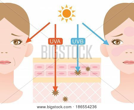 infographic skin illustration. the difference between UVA and UVB rays.