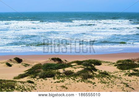 Waves crashing onto a rural beach with natural sand dunes and coastal shrubs taken at the Guadalupe Dunes in the Central Coast, CA