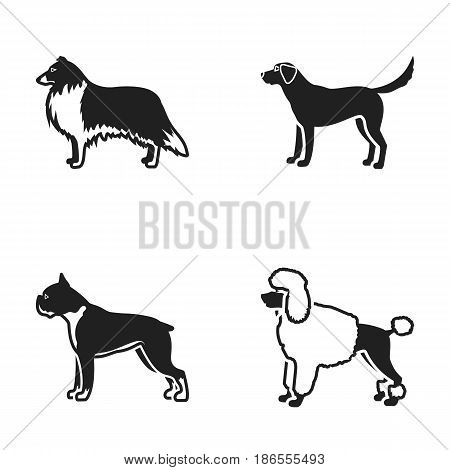 Collie, labrador, boxer, poodle. Dog breeds set collection icons in black style vector symbol stock illustration .