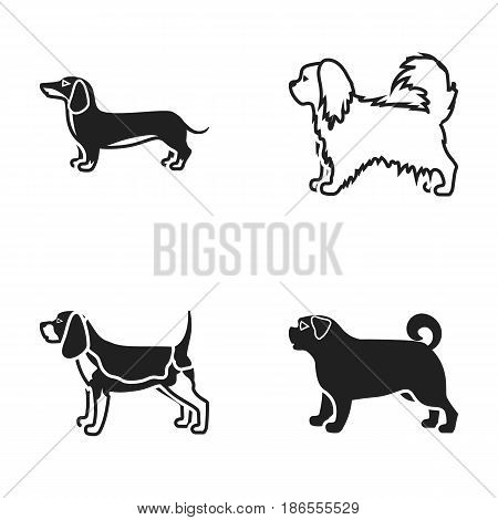 Pikinise, dachshund, pug, peggy. Dog breeds set collection icons in black style vector symbol stock illustration .