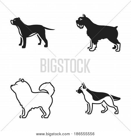 Pit bull, german shepherd, chow chow, schnauzer. Dog breeds set collection icons in black style vector symbol stock illustration .