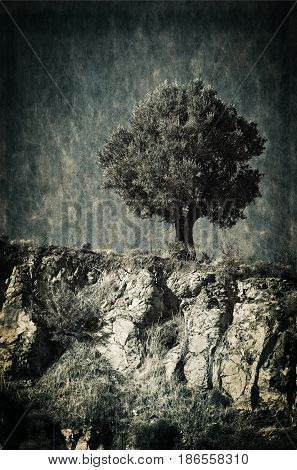 Single tree standing on the top of a cliff edge. Grain texture and gritty detail used for effect.