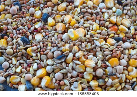 Bird seed a variety of millet, sunflower seed, cracked corn and other seeds used as bird food.