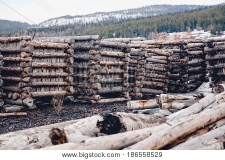 Packing wood in stacks for storage in the winter in the forests of the taiga Russia. Concept logging.