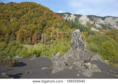 Trees covered in colourful autumn foliage rising out of the lava fields in Conguillio National Park in the Araucania region of Chile