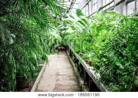 exotic green plants in old orchard-house indoor space