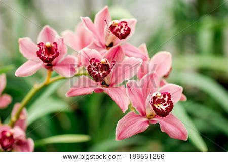 abstract pattern with pink flower close up in greenhouse space