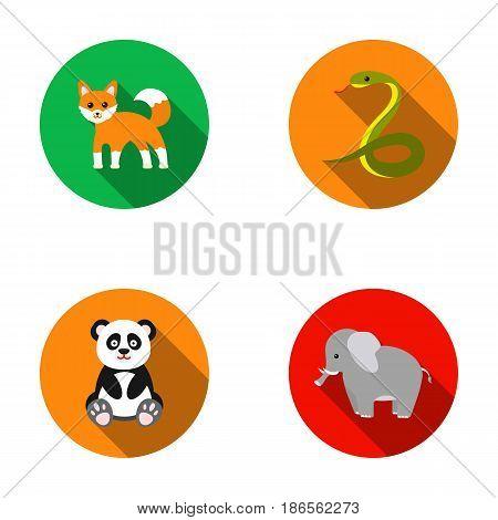 Panda, elephant, snake, fox.Animal set collection icons in flat style vector symbol stock illustration .