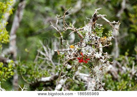Red Berry Growing On A Dry Branch