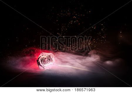 A wilting rose signifies lost love divorce or a bad relationship dead rose on dark background with smoke