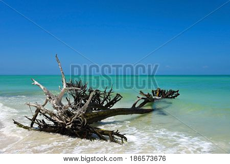 Beautiful Weathered Driftwood