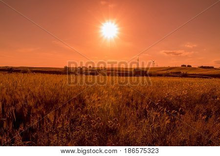 Green Grass Field Landscape Under Sunset Sky In Spring With Clouds In The Background, Spring Time At
