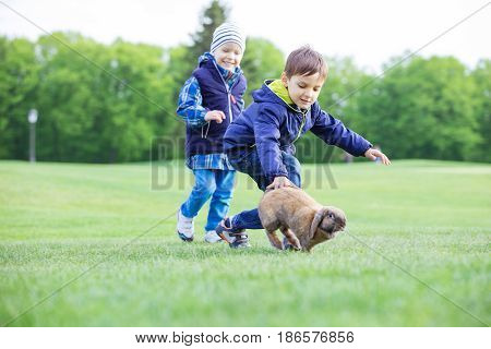 Preschool boys catching pet rabbit on lawn in spring park