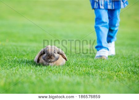 Young boy walking with pet rabbit in spring park