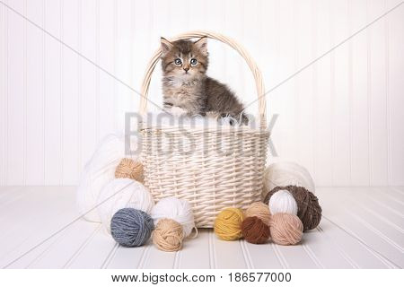 Little Cute Kitten in a Basket With Yarn on White