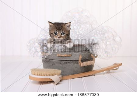 Kitten in Washtub Getting Groomed By Bubble Bath