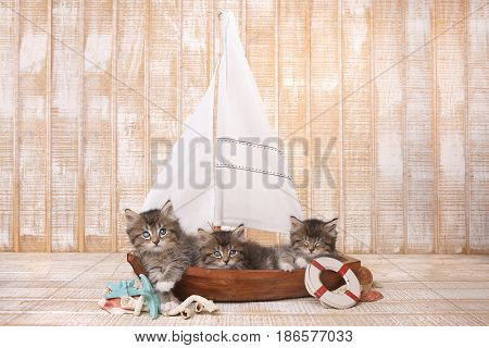 Little Cute Kittens in a Sailboat With Ocean Theme
