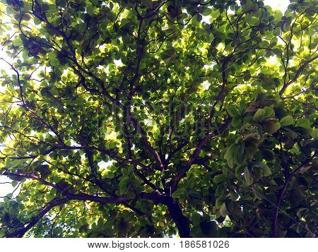 Abstract background of trees leaves and lighting
